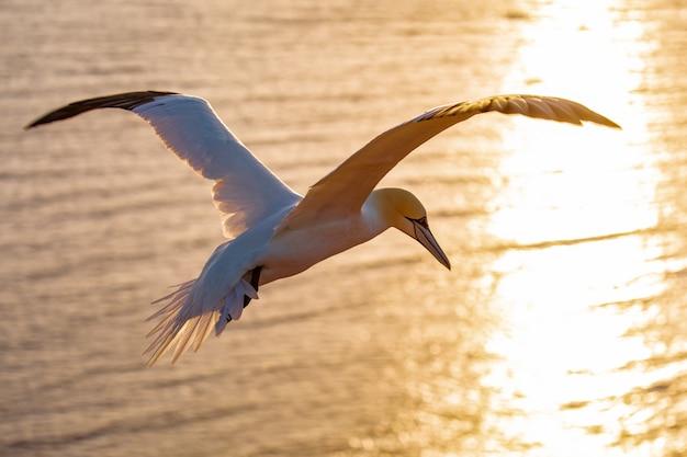 Vogeltier, das über meer fliegt