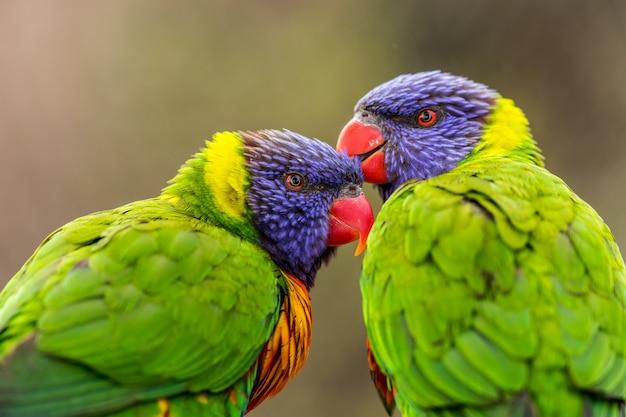 Vogeltier papagei und sittich