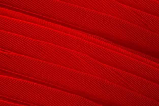 Vollbild schuss von roter feder