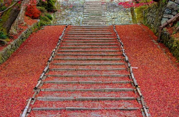 Volle gefallene rote ahornblätter auf alter treppe zum japanischen tempel auf herbstsaison.