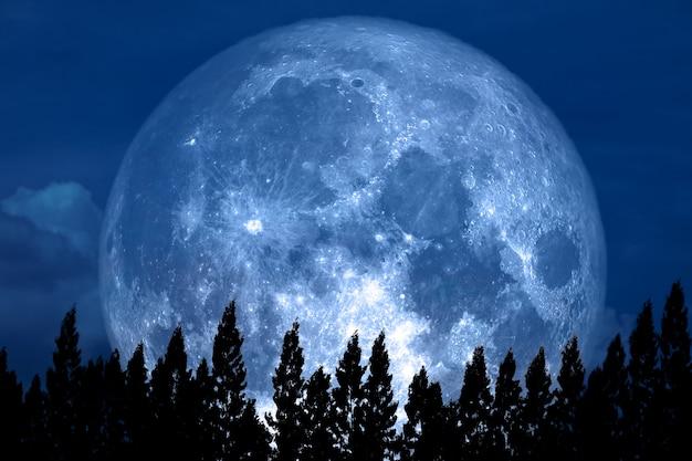 Volle rose moon zurück auf schattenbildkiefer am nächtlichen himmel