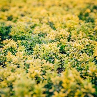 Voller rahmen der kleinen grünen und gelben blattanlage