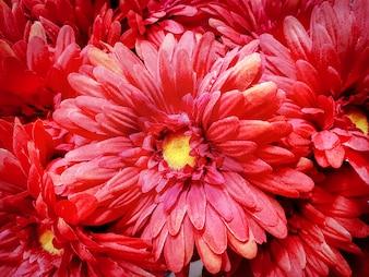 Voller Rahmen-Hintergrund von roten künstlichen Blumen