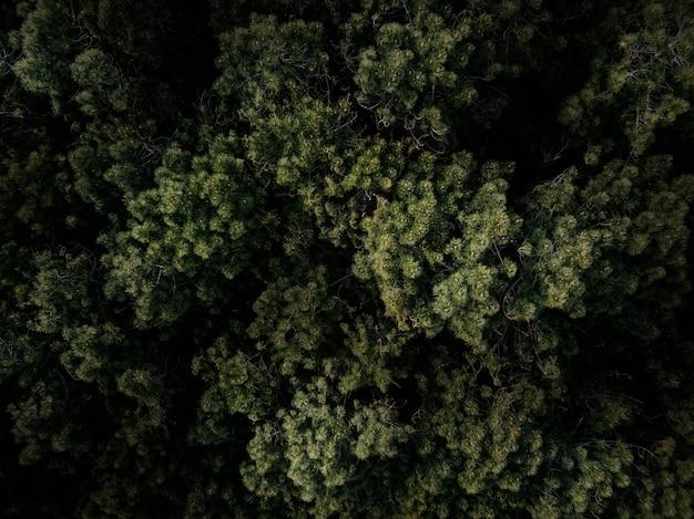 Voller rahmen schoss von den grünen bäumen, die im wald wachsen