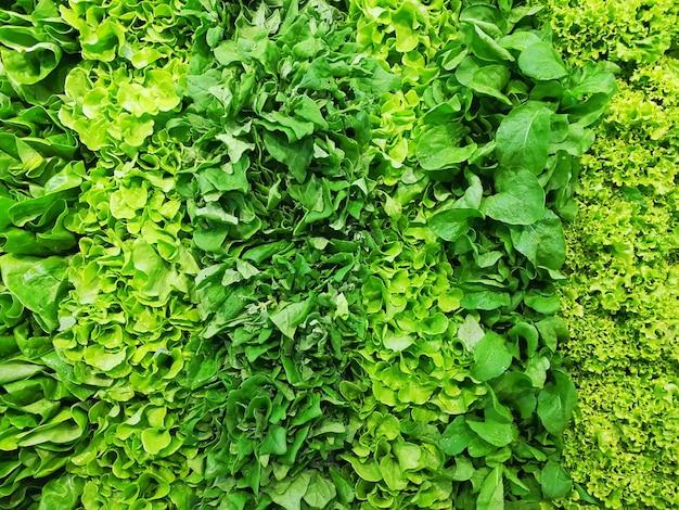 Voller rahmen von frischen und grünen salatreihen.