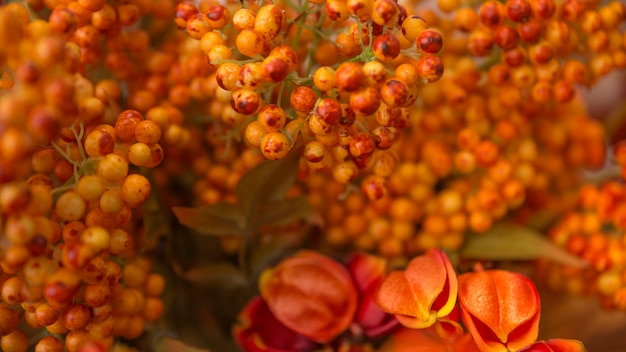 Voller rahmen von hellen kleinen orangenblumen