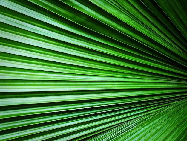 Voller rahmenhintergrund der grünen palmblatt-beschaffenheit