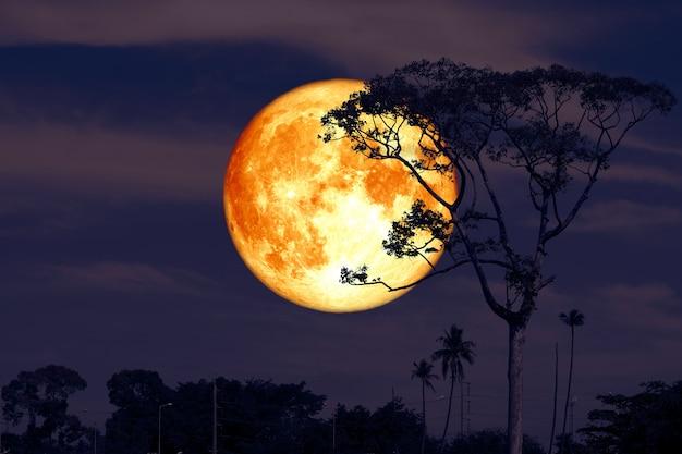 Voller superdollarmond auf hinterem schattenbildbaum des nächtlichen roten himmels