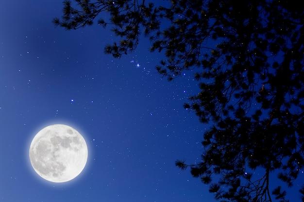Vollmond mit sternenhimmel über tannenzweigen. romantische nacht.