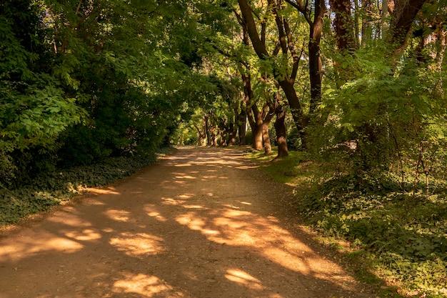Von bäumen umgebener, schattiger weg