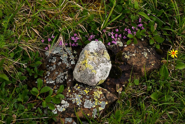 Von der natur geschaffene komposition aus steinen und blumen in der bergtundra