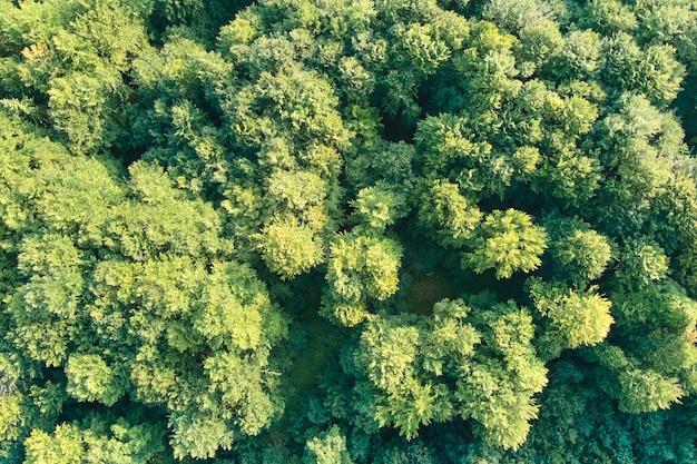 Von oben nach unten flache luftaufnahme des dunklen üppigen waldes mit grünen baumkronen im sommer.