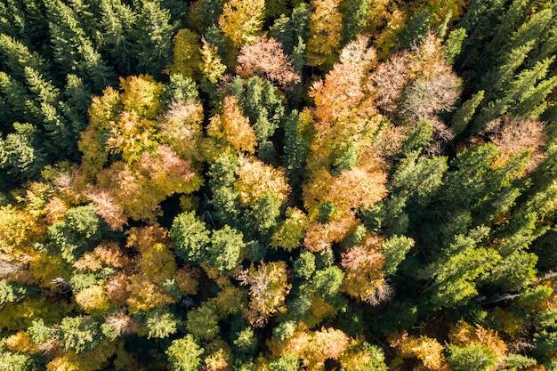 Von oben nach unten luftaufnahme des grünen und gelben herbstwaldes mit vielen frischen bäumen.