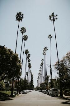 Von palmen gesäumter boulevard in los angeles