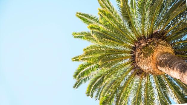 Von unterhalb tropischer palmenkrone
