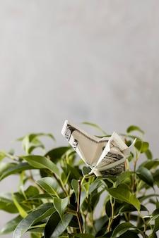 Vorderansicht der banknote auf pflanze mit kopierraum