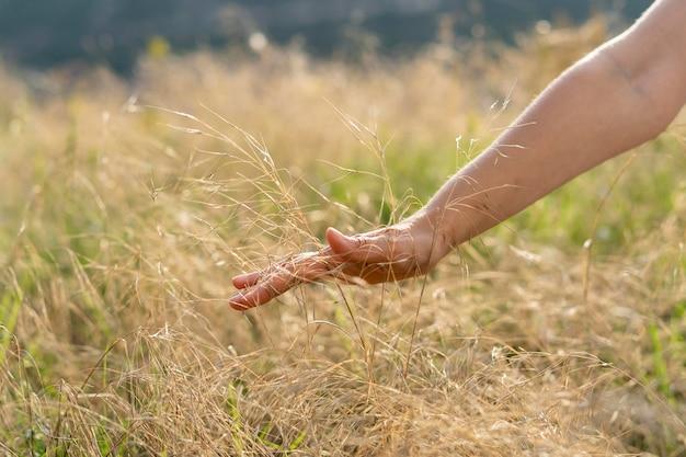 Vorderansicht der frau, die ihre hand durch gras läuft