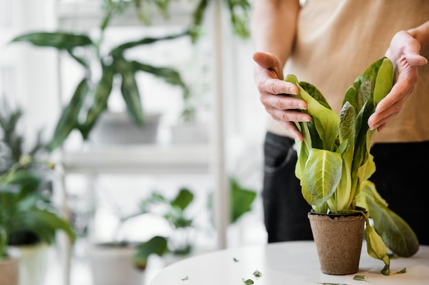 Vorderansicht der frau, die pflanze innen mit kopienraum kultiviert