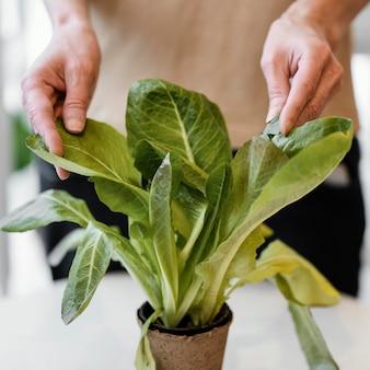 Vorderansicht der frau, die pflanze kultiviert