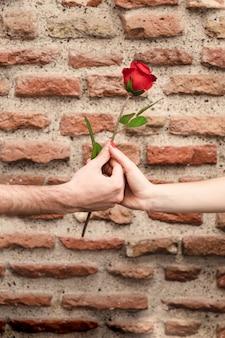 Vorderansicht der paar hände, die eine rose teilen