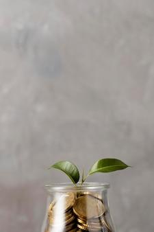 Vorderansicht der pflanze, die vom glas der münzen mit kopienraum wächst