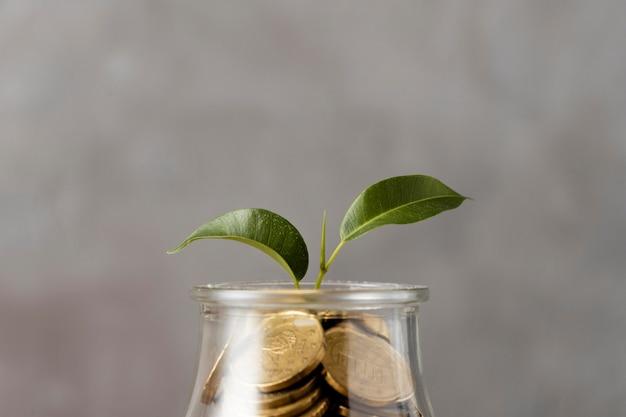 Vorderansicht der pflanze, die vom glas der münzen wächst