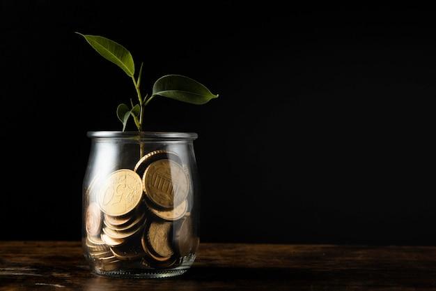 Vorderansicht der pflanze, die vom glas mit münzen und kopienraum wächst