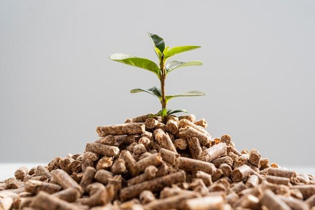 Vorderansicht der pflanze, die von den pellets wächst