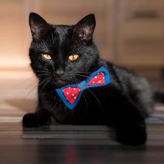Vorderansicht der schönen schwarzen katze mit fliege