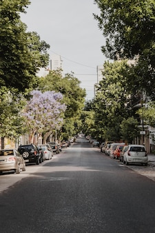 Vorderansicht der stadtstraße mit autos und bäumen
