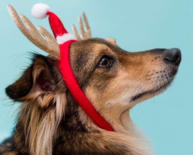 Vorderansicht des niedlichen hundes mit weihnachtskonzept
