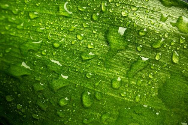 Vorderansicht grünes blatt mit tropfen auf dem dunklen naturtauwaldgrünluftbaum