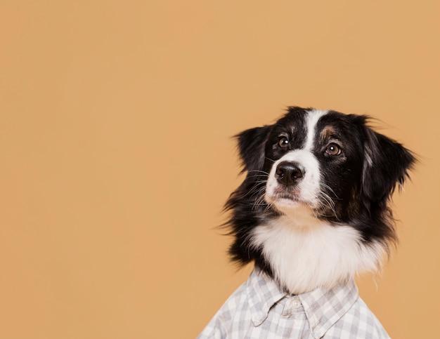 Vorderansicht niedlicher hund mit kopienraum