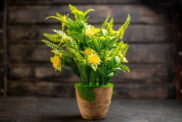 Vorderansicht topfpflanze auf holzoberfläche