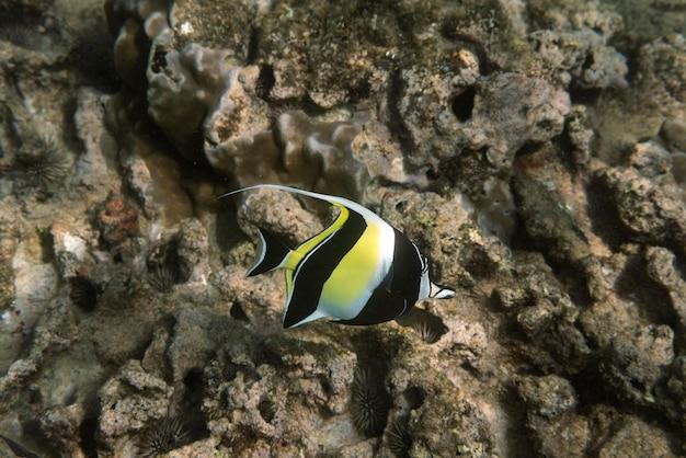 Vorderansicht von exotischen fischen, die im ozean schwimmen