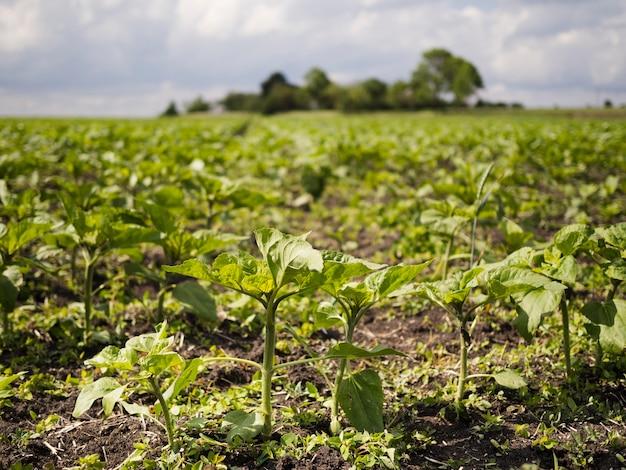Vorderansichtfeld mit pflanzenlandschaft