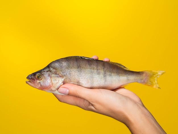 Vorderansichthand, die frische fische anhält