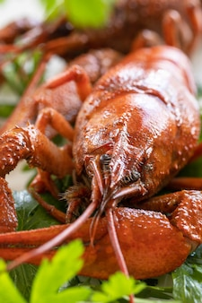 Vorspeise protein gekochte langusten nahaufnahme und petersilienblätter