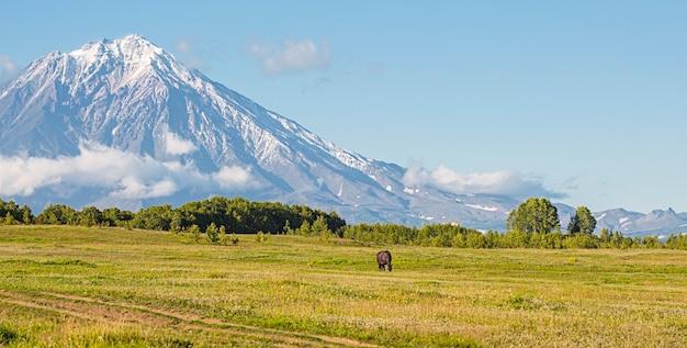 Vulkan und wiese mit einem pferd in kamtschatka