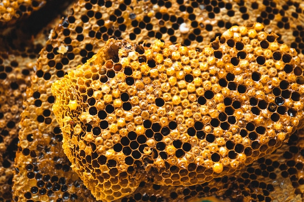 Wabenbienenlarvennest und nektarwaben