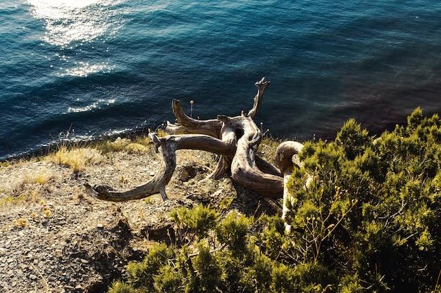 Wacholder ist ein kriegsbaum oder strauch aus der familie der zypressen.