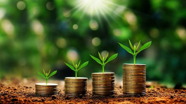 Wachsende anlagen auf den münzen, die auf grün gestapelt wurden, verwischten hintergründe und natürliches licht mit finanzideen.