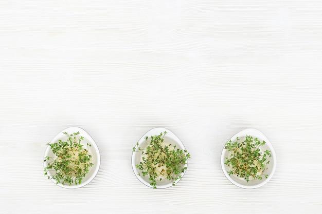 Wachsende micro-greens zum richtigen essen. sehr gesunder gemüsesalat. moderne naturkost. flach lag mit textfreiraum.
