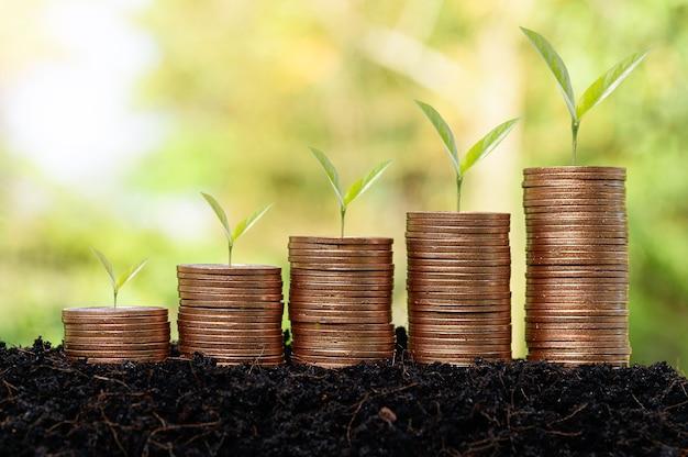 Wachsende pflanze geldmünzenstapel, unternehmensfinanzierung und geld sparen investition