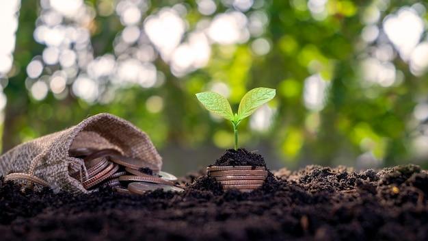 Wachsende pflanzen mit geld, das in der morgensonne aus dem boden kommt, geschäftsinvestitionsideen.