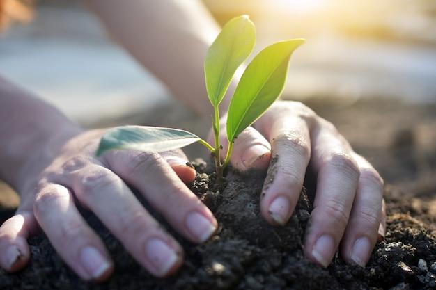 Wachsender baum der leute, bewässerungsanlagen und pflanzen von bäumen