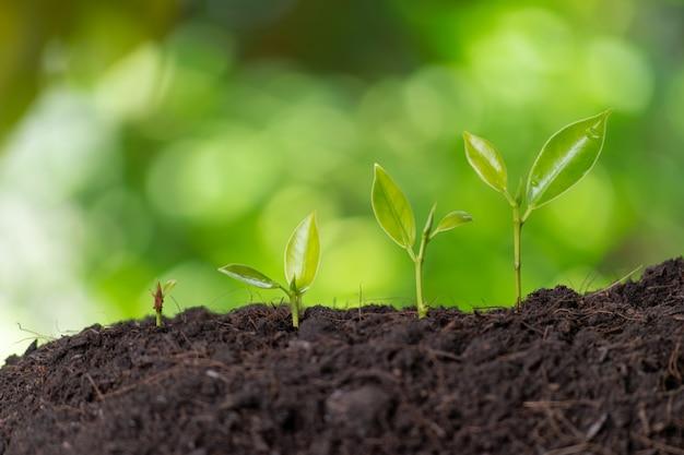 Wachstumsbäume im morgenlicht der natur und in der grünen bokehwand. weltumwelt oder tag der erde.