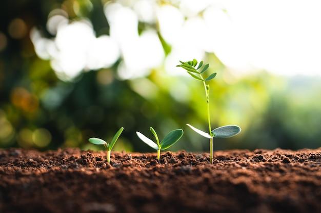 Wachstumsbaum junge pflanze natürliches natürliches licht am abend