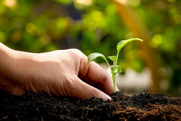 Wachstumskonzept, hände pflanzen die sämlinge in den boden