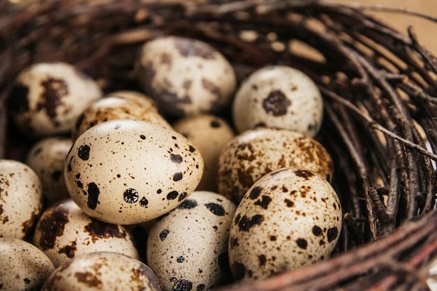 Wachteleier in einem nest von birkenzweigen. vogelnest. natürliche osterdekoration